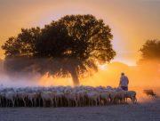 Ocaso ovejuno 2