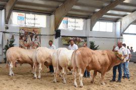 Resultados del X Concurso Nacional de Raza Blonda de Aquitania. Sección Machos