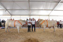 Resultados y Campeones del XXIX Concurso Nacional de Raza Charolesa Machos